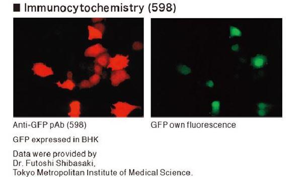 FluorescentBlog.jpg