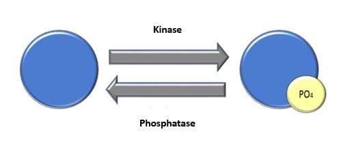 PhosphoBlog