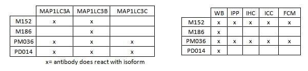 antiLC3_isoforms